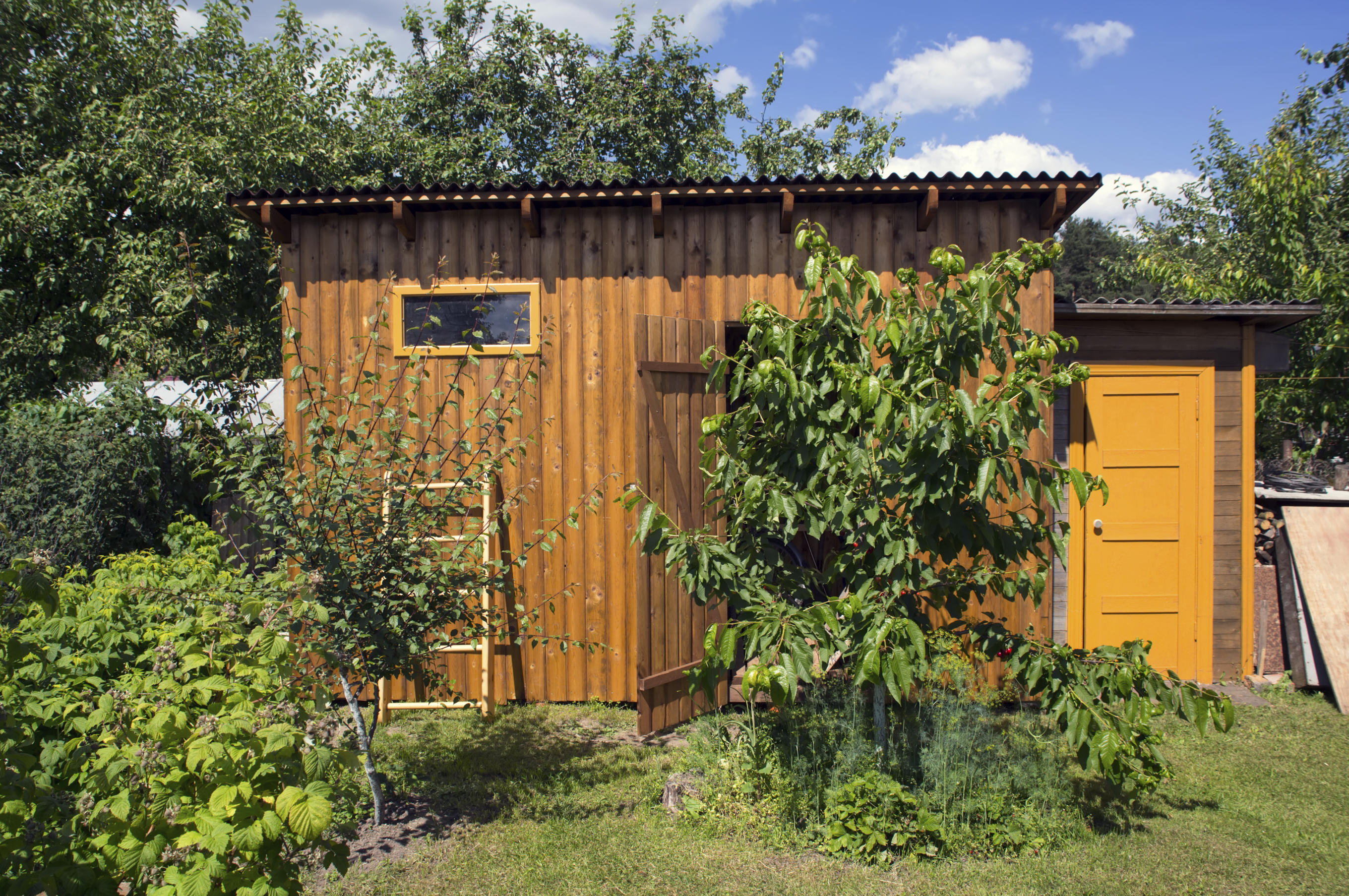 Wooden shed backyard with garden trees
